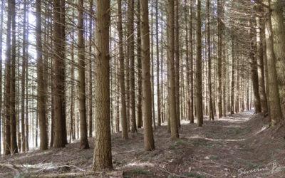 50 nuances de bois