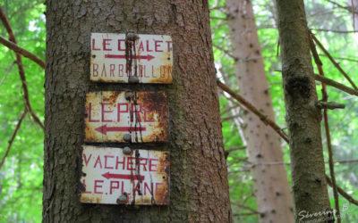 Dans la forêt du Mont Cuchet